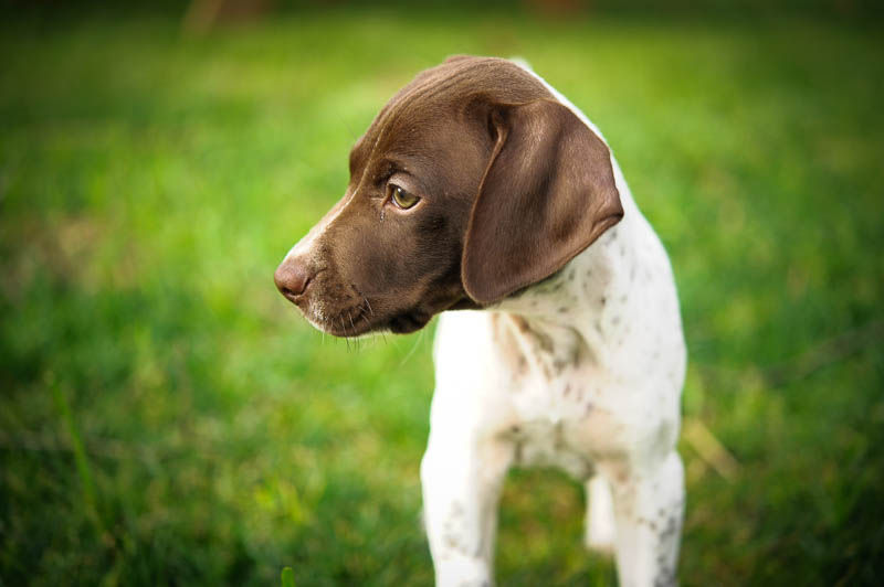 Benelli The GSP